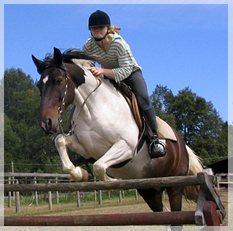 classes for show jumping